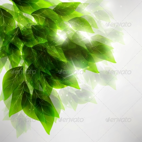 Beautiful Green Leaves - Seasons Nature