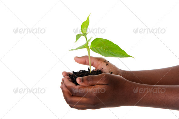 Plant in child hands - Stock Photo - Images