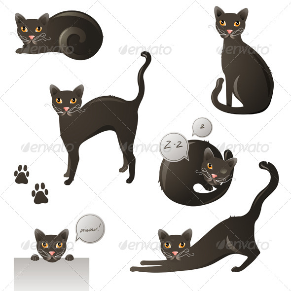 Black Cat - Animals Characters