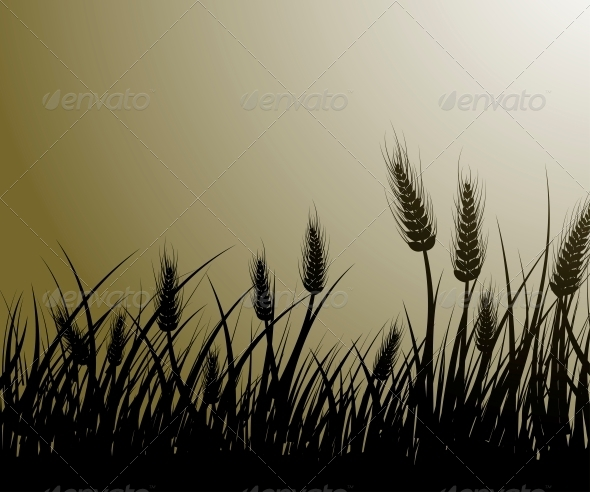 Field of Wheat - Flowers & Plants Nature