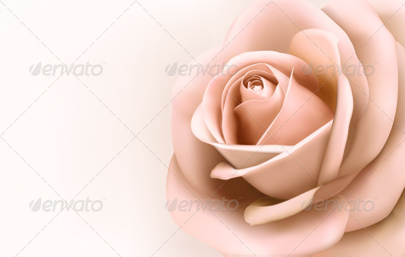 Background with Beautiful Pink Rose - Flowers & Plants Nature