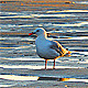 Seagull - VideoHive Item for Sale