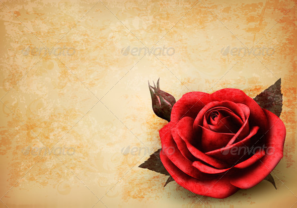 Retro Background with Red Rose with Bud - Flowers & Plants Nature