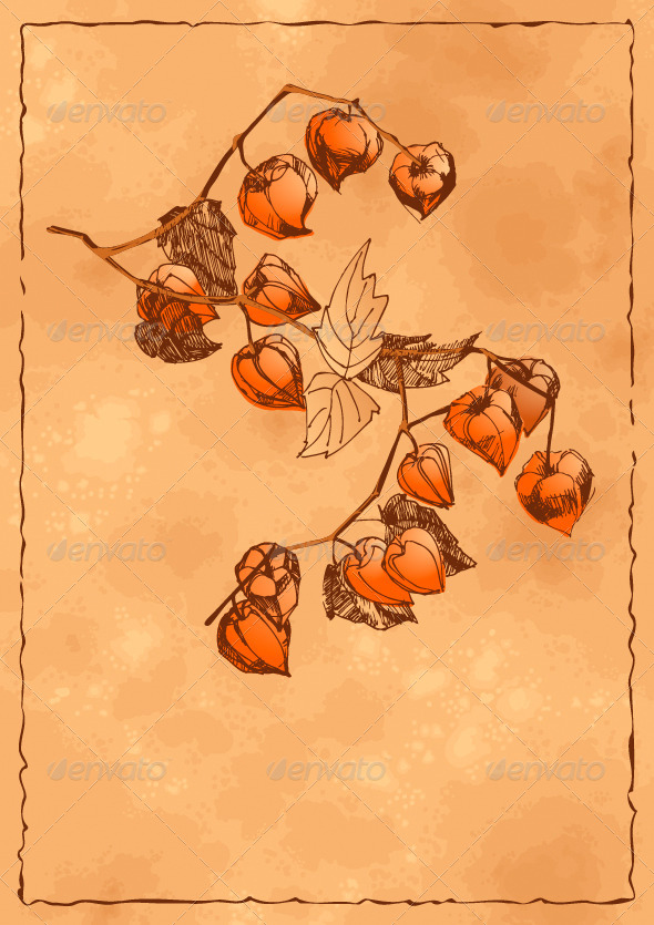 Autumn Background with Orange Physalis - Flowers & Plants Nature