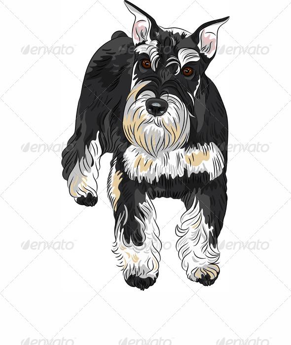 dog breed Miniature Schnauzer - Animals Characters