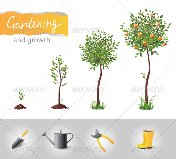 Gardening and Growing Tree - Flowers & Plants Nature