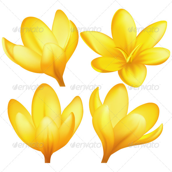 Vector Yellow Crocuses - Flowers & Plants Nature