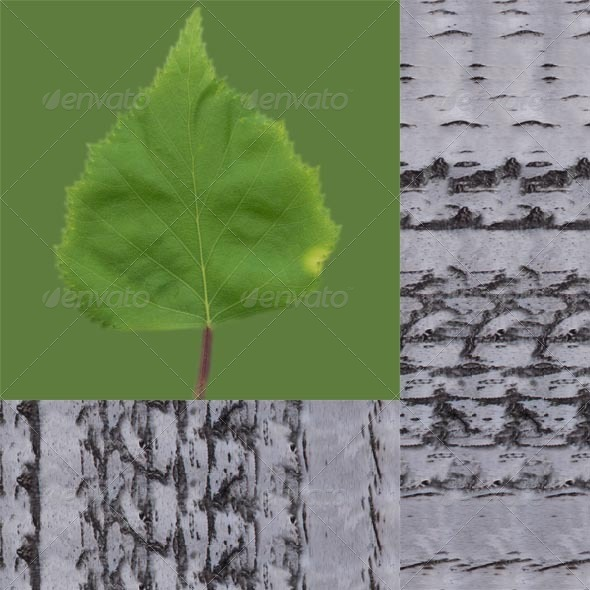 Birch Leaf And Bark - 3DOcean Item for Sale