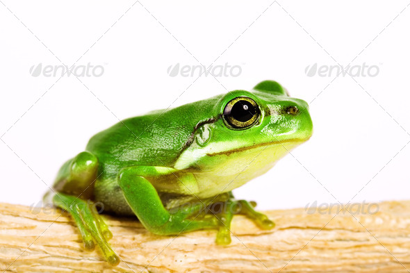 tree frog on stem of plant - Stock Photo - Images
