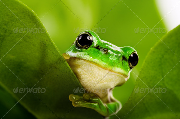 Frog peeking out - Stock Photo - Images
