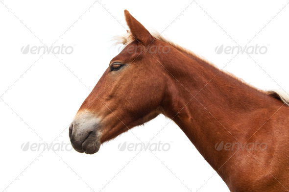 horse head isolated - Stock Photo - Images