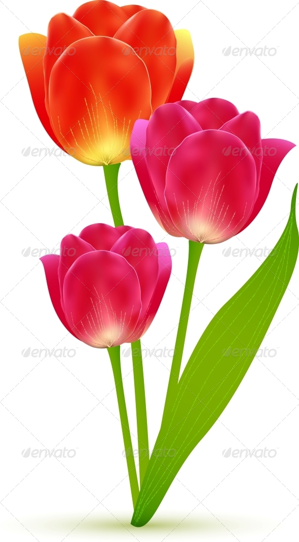 Vector Isolated Tulip Flowers Bouquet - Flowers & Plants Nature
