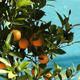 Orange Pool - VideoHive Item for Sale