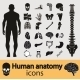 Human Anatomy Icons - GraphicRiver Item for Sale