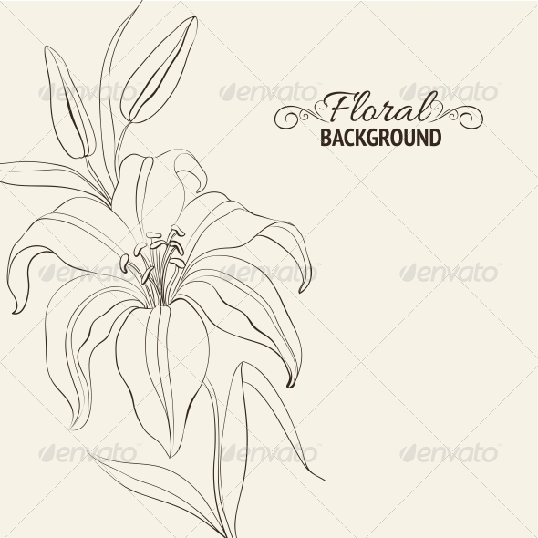 Lily Flower Isolated Over White - Flowers & Plants Nature
