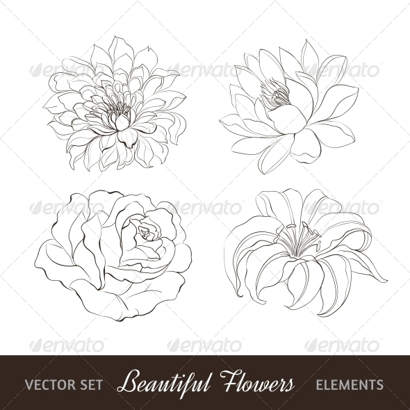 Set of Flowers Isolated over White. - Flowers & Plants Nature
