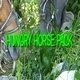 Hungry Horse Pack - VideoHive Item for Sale