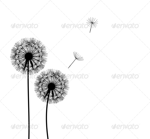 Abstract Dandelion Background - Flowers & Plants Nature