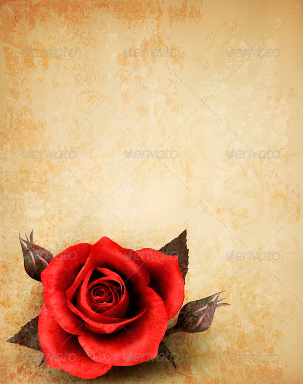 Big Red Rose on Old Paper Background - Flowers & Plants Nature