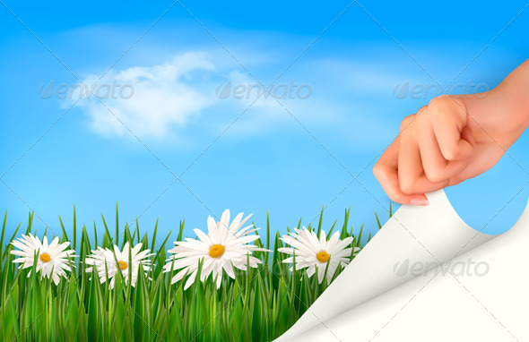 Nature Background with Green Grass Daisies  - Nature Conceptual