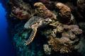 Sea turtle - PhotoDune Item for Sale