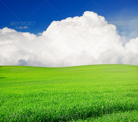 field of grass and perfect blue sky - Stock Photo - Images