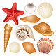 Seashells collection - GraphicRiver Item for Sale