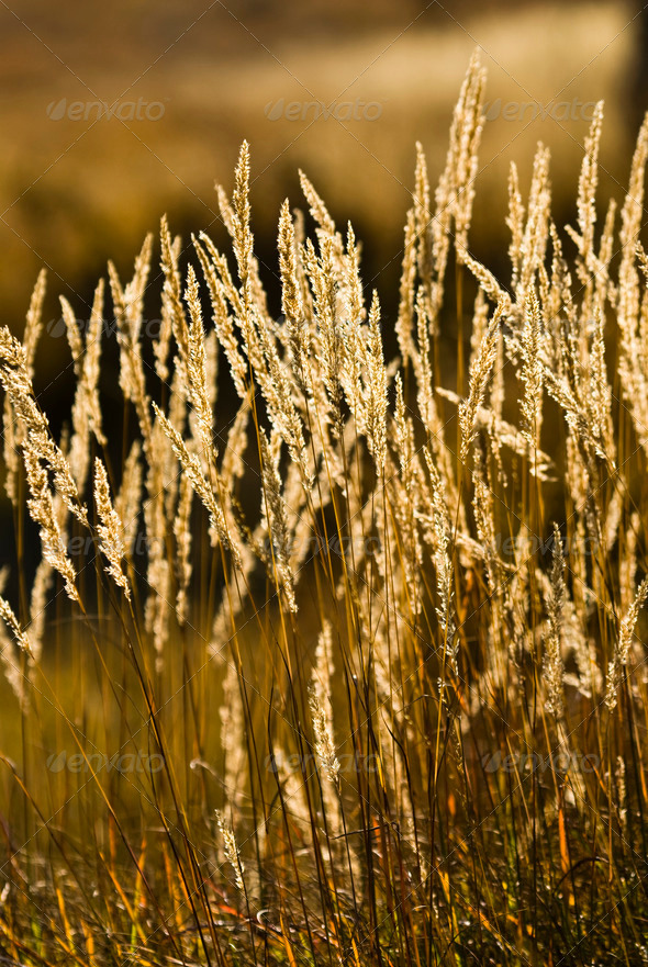 Grass Spikes - Stock Photo - Images