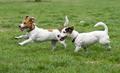 Happy Dogs - PhotoDune Item for Sale