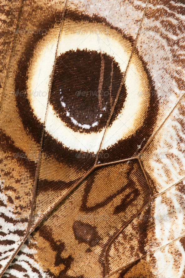 Butterfly Wing - Stock Photo - Images