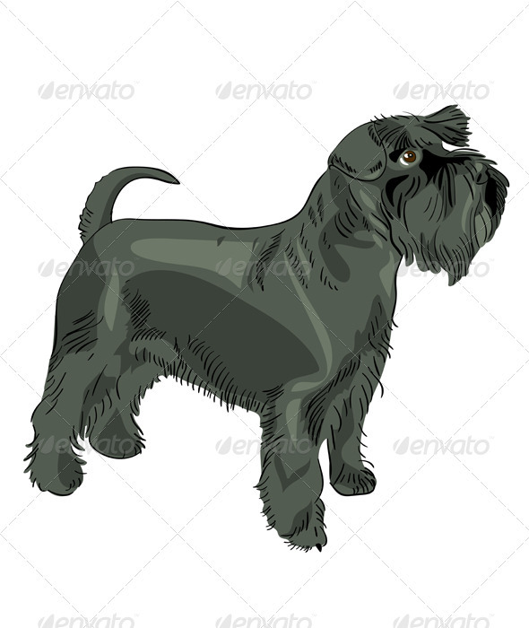 Vector black Miniature Schnauzer dog - Animals Characters
