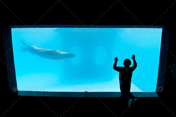Child in a Public aquarium - Stock Photo - Images