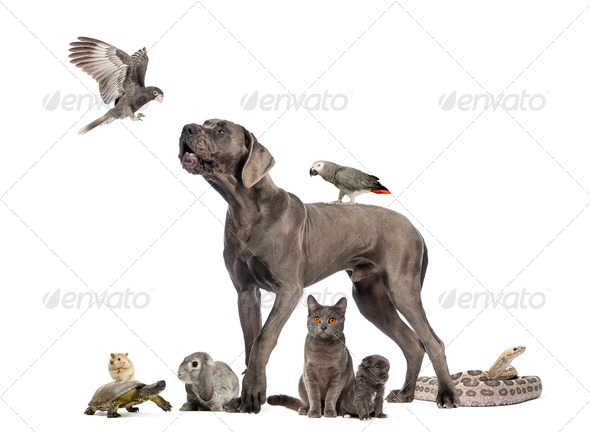 Group of pets - Dog, cat, bird, reptile, rabbit, isolated on white - Stock Photo - Images