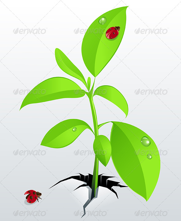 Young Green Plant and Ladybird - Flowers & Plants Nature