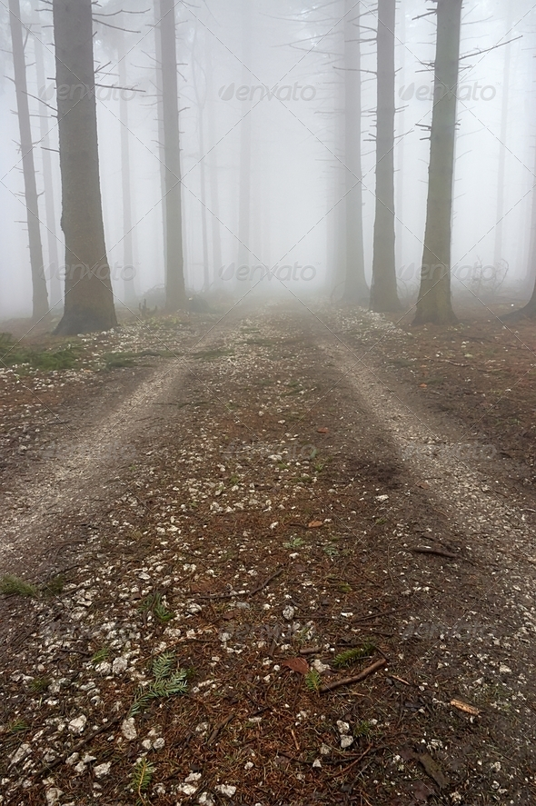 Forest road - Stock Photo - Images
