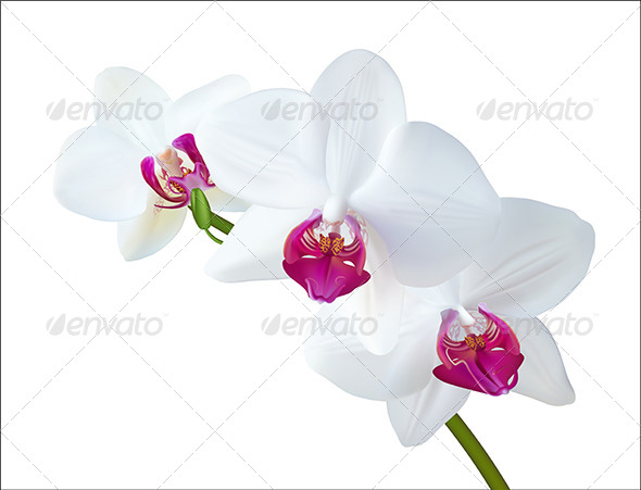 White Orchid - Flowers & Plants Nature
