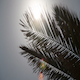 Palmtree with sun and flares - VideoHive Item for Sale