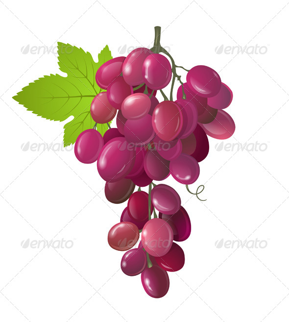 Grapes - Food Objects