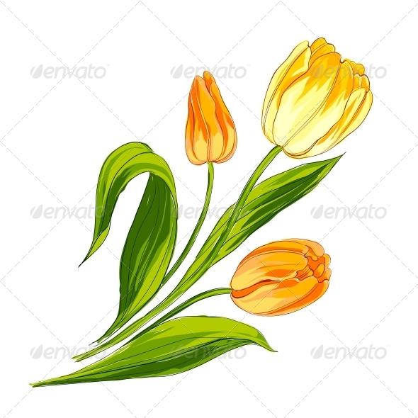 Tulip Bouquet - Flowers & Plants Nature