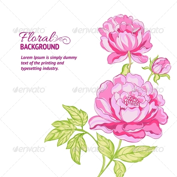 Pink Peonies Background with Sample Text - Flowers & Plants Nature