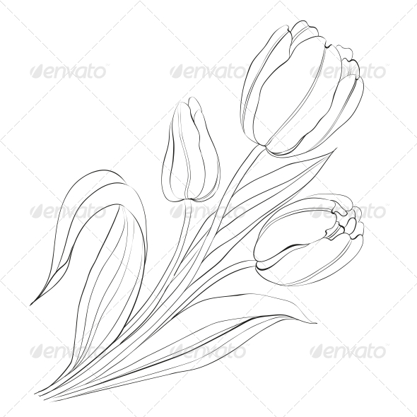 Hand Drawn Tulips - Flowers & Plants Nature