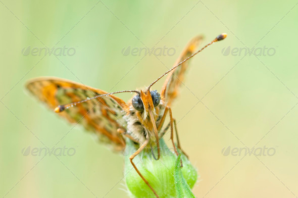 Butterfly Closeup - Stock Photo - Images