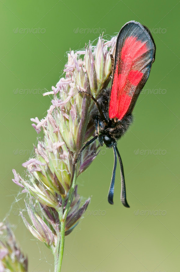 Red Butterfly on Green Spike - Stock Photo - Images