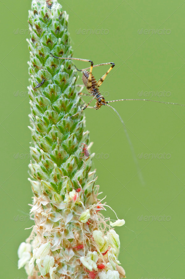 Cricket on a Spike - Stock Photo - Images