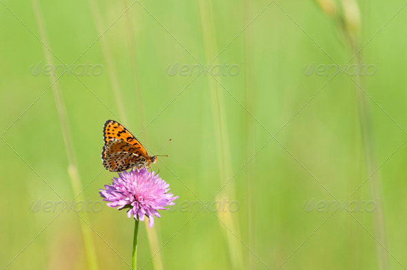 Butterfly on Pink Flower - Stock Photo - Images