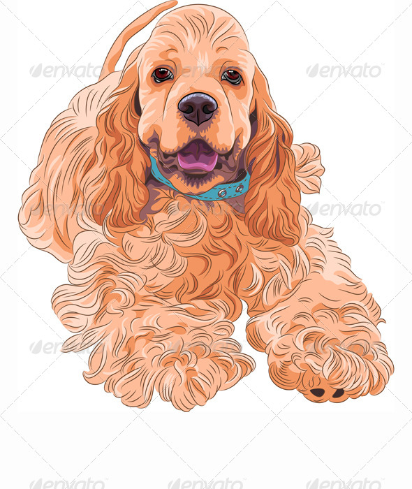Dog American Cocker Spaniel breed - Animals Characters