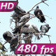 Urban Pigeons - VideoHive Item for Sale