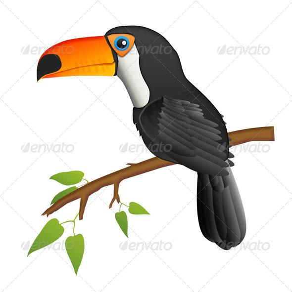 Toucan  - Animals Illustrations