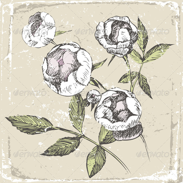 Hand Drawn Roses - Flourishes / Swirls Decorative