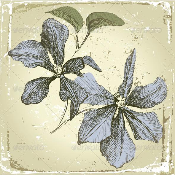 Hand Drawn Clematis Flowers - Flourishes / Swirls Decorative